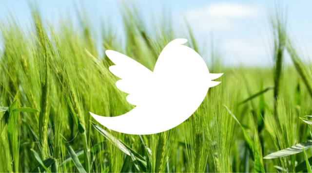 SMM In Twitter